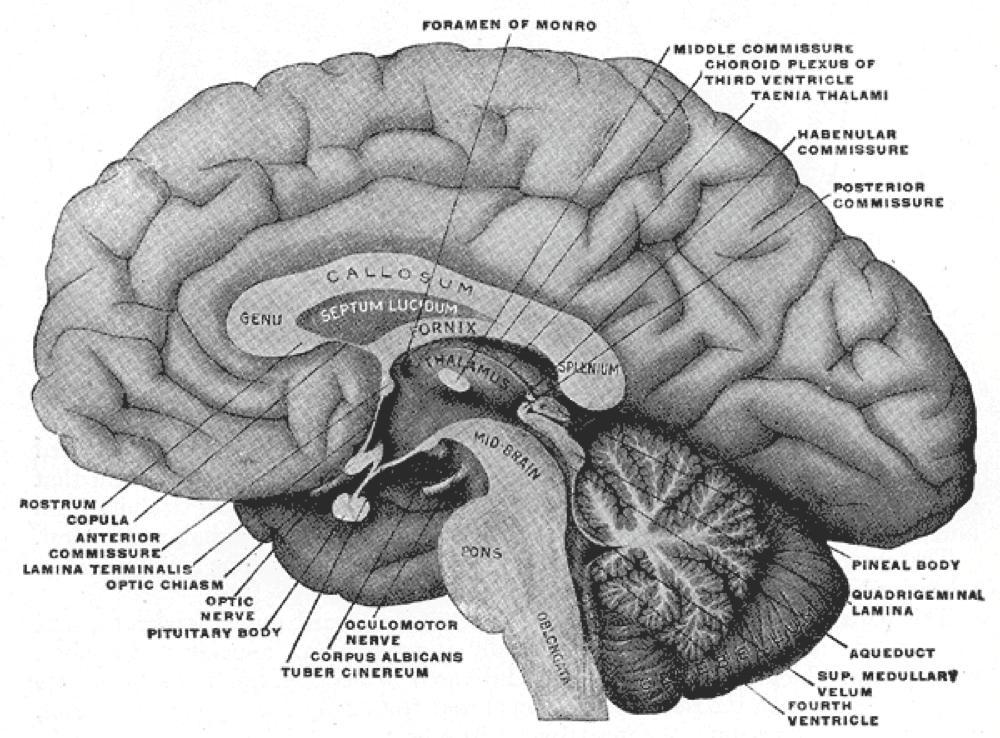 2-脳断面